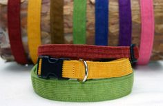 Organic corduroy dog collars made by Planet Blue Dog in Colorado.