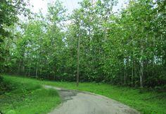 Road to Quinam Beach