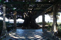 alameda apodaca Outdoor Decor, Home Decor, Cities, Fotografia, Decoration Home, Room Decor, Interior Decorating