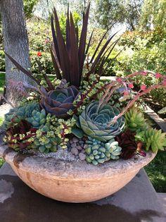 Succulent arrangement by 26 Blooms Succulent Landscape and Design