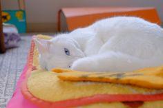 cat 2013年11月 : ねこごち