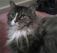 My cat Izzy. Ilene, Sprinfield, IL - 2/25/2015