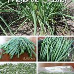 How to Preserve Chives by Freezing