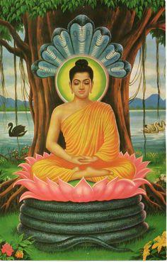 Buddha | ferrebeekeeper
