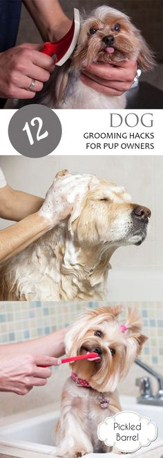 12 Dog Grooming Hacks for Pup Owners| How to Groom Your Dogs, Pet Grooming Hacks, Hacks for Pet Owners, Tips and Tricks for All Pet Owners, DIY Pet Grooming, Popular Pin .