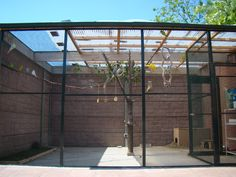 Our aviary