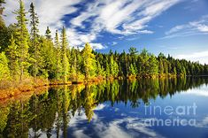 Forest reflecting in lake fine art photography print - Copyright © Elena Elisseeva