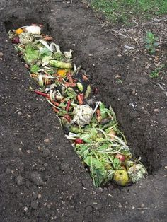 A Great Way To Use Your Homestead Food Scraps in the Garden Without a Compost Bin - http://www.homesteadingfreedom.com/a-great-way-to-use-your-homestead-food-scraps-in-the-garden-without-a-compost-bin/