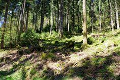 Woodland IMGP2394a by Biberius on DeviantArt