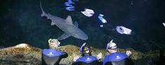 PA adventure aquarium