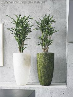 Die 29 Besten Bilder Von Pflanzen Furs Buro Potted Plants Indoor