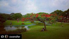 Foto de @owendfer Un vistazo al parque del oeste . #ccs #caracas #caminacaracas  Acacia Flamboyant. #flores #flowers #redflowers #parques #parquedeloeste #tardes #paisajes