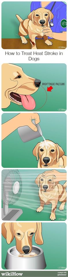 Dogs Stuff - How To Care For A Dog: Tips And Advice * Check out the image by visiting the link. #DogsStuff