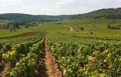 Wine Tours from Beaune, Burgundy, France