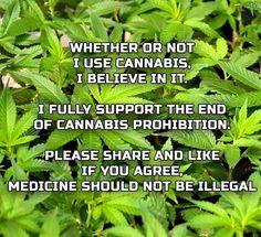 Whether or not I use cannabis, I believe in it.  I fully support the end of…