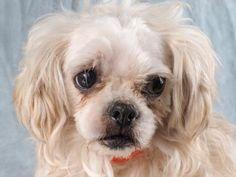 SpeciesDog BreedShih Tzu/Mix Age8 years 9 days SexMale SizeSmall ColorWhite/Cream No Small Kids SiteNational Mill Dog Rescue LocationKennel Intake Date2/4/2015 Adoption Price$150.00