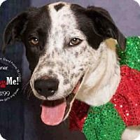 Pointer Mix Dog for adoption in Grand Prairie, Texas - DONNER