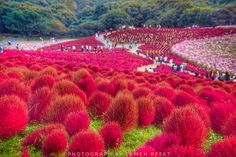 World of Red, Japan  -