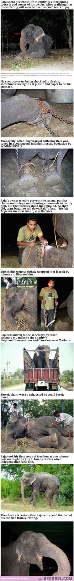 Aww Raju...Live free sweetheart!  Find comfort in life as best you can, and for what it's worth...I'm sorry humans had to be so cruel to you!  We're not all like that, I promise!!!  <3