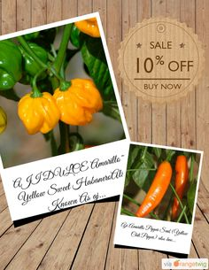 10% OFF on select products. Hurry, sale ending soon! Check out our discounted products now: https://orangetwig.com/shops/AAAibxW/campaigns/AABufU4?cb=2015012&sn=CaribbeanGarden&ch=pin&crid=AABue0M