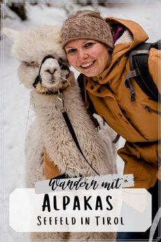 Eine Wanderung mit Alpakas wird Licht und Freude in jedes Herz bringen. Selten haben wir so etwas lustiges und süßes erlebt, wie bei unserer Alpaka Wanderung. Hier findest du Infos, wo wir das gemacht haben!