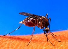 شركة تنظيف شقق بمكة وتتعامل مع جميع انواع الحشرات لاشك ان الحشرات والقوارض قد اصبحت تهدد صحتنا