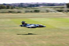 Buccaneer in its natural environment.