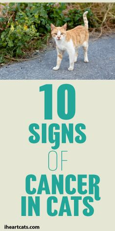 Super Important!! 10 Signs Of Cancer In Cats