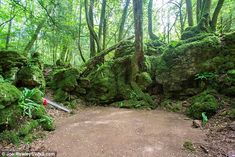 merlin forest location bbc france - Google Search