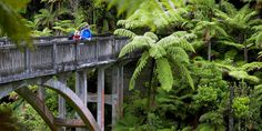 New Zealand's 9 Great Walks. From lush forests to mountain peaks, hiking allows you to experience some of the country's best scenery, wildlife and national parks. Air New Zealand, New Zealand Travel, Auckland, New Zealand Destinations, Nz History, Great Walks, Camping Spots, Surfer, United Airlines