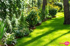 19 roślin, które będą rosły w zacienionych miejscach! - Twoje DIY Bonsai, Stepping Stones, Diy And Crafts, Pergola, Outdoor Decor, Flowers, Plants, Gardening, Home Decor