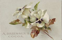 COCOA DRIESSEN ENGLISH FLOWERS | by patrick.marks
