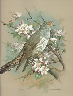 Free Bird Images and Paintings