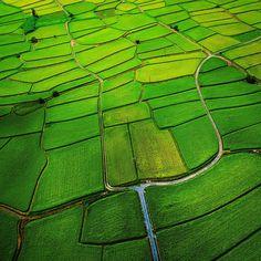 iPad mini Retina, Nature, green grassland - Wallpaper