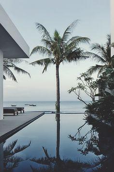 Palm daydreams
