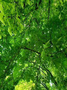 orman yaprak yeşil