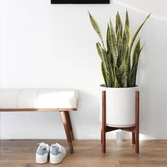 """Large - Mid-century Modern Cylinder Planter with Walnut or Oak Wood Stand - 12"""" Ceramic Pot"""