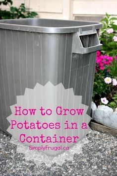 Alaska Grow buckets The easiest self watering container that anyone can make to grow food and it simply works Square Foot Gardening