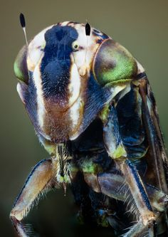 nice Incredible High Quality Macro Photography of Insects Macro Fotografie, Fotografia Macro, Microscopic Photography, Insect Photography, Levitation Photography, Exposure Photography, Water Photography, Abstract Photography, Cool Insects