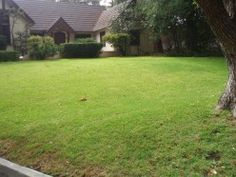 Lawn is a mix of St. Augustine and Bermuda grass. Note that the heat has taken its toll. Areas around the curb are brown now, where they weren't before.