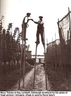 "Hop pickers - from ""Pictures from the past - Rural Life""  by John Seymour"