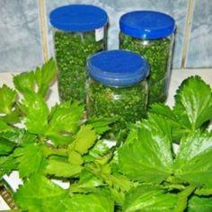 Zeller télire Zeller, Food Storage, Preserves, Spices, Food And Drink, Tasty, Herbs, Plants, Petra
