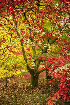 The Fall by Jacky Parker Floral Art, via Flickr