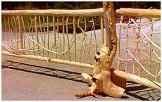 Twig Railing & Deformed Post