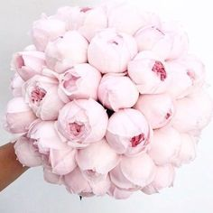 I could genuinely bite this perfect wedding bouquet. I'm not having a bouquet when I get married but I would definitely choose peonies if I was! My Flower, Fresh Flowers, Pink Flowers, Beautiful Flowers, Peony Flower, Prettiest Flowers, Flowers Bunch, Peony Rose, Cactus Flower