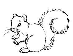 Dessin d'écureuil #149 - Cliquez pour imprimer