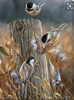 This Autumn Black-Capped Chickadees Wrapped Canvas Art features a beautiful painted scene of three chickadees sitting on a fence post in the middle of a field. The wrapped canvas design gives a unique Watercolor Bird, Watercolor Paintings, Original Paintings, Bird Pictures, Wildlife Art, Bird Art, Beautiful Birds, Canvas Art, Art Prints