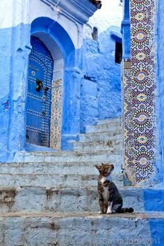 Chefchaouen - I truly appreciate Moorish architecture, and cats Travel Photography Inspiration, Travel Inspiration, Art Photography, Beautiful World, Beautiful Places, Stairways, Belle Photo, Shades Of Blue, Scenery