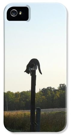 A farm cat perches atop a post looking down at the ground on the morning of 11 September 2011 in a photo taken by Kent Lorentzen. $34.50