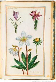 [Illustrations de Le Jardin du très chrestien Henry IV.] / [Non identifié] ; Pierre Valet, aut du texte | Gallica